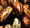 Cocoa - one of the plants that feed us